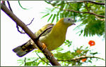 Title: All yellow...Lovely Fellow...