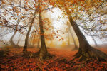 Title: Foggy Fall