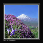 Title: This is Damavand