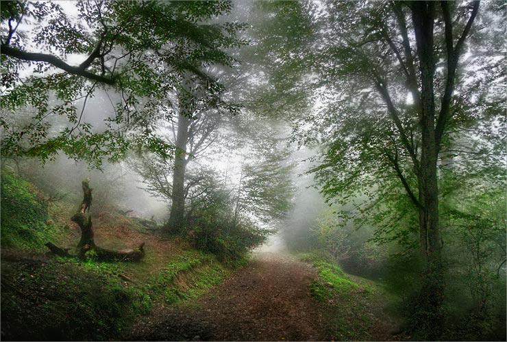 Foggy forest 3