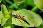 Title: Unknown insect on a leaf