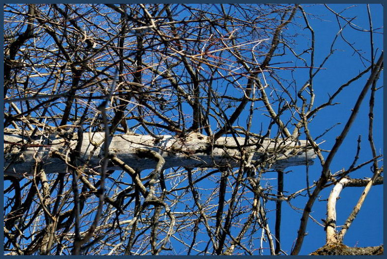 Dead and dry tree