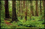Title: Deep Forest 2