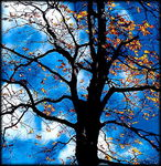Title: lonely tree 6