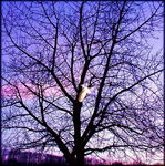 Title: lonely tree 5
