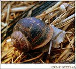 Title: CARACOL