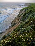 Title: California Coastline