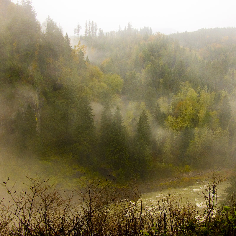 Misty woodlands by Snoqualmie Falls