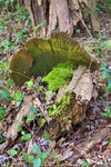 Title: HDR of Mossy log with FungiCanon EOS 40D