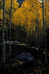 Title: Little Cottonwood Canyon in Fall