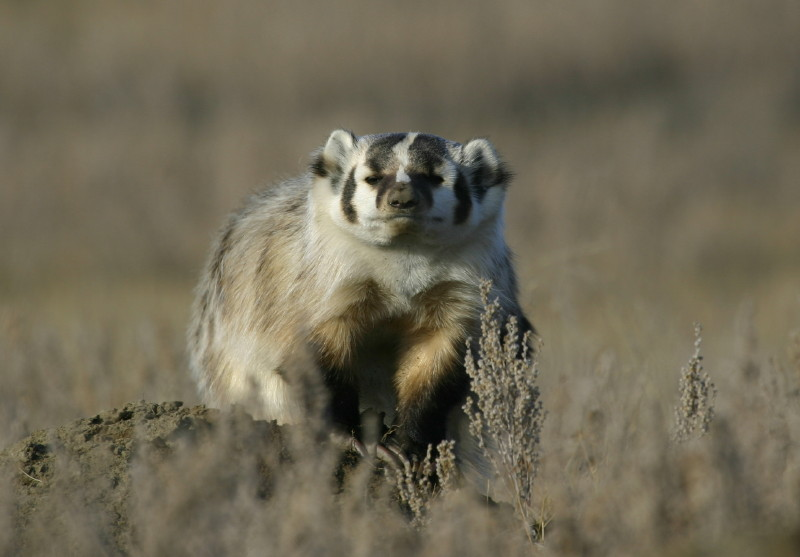 Seen any Gophers?