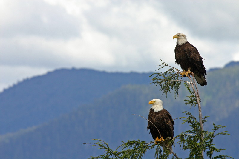 My Vision of Eagles