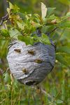 Title: Paper Wasps