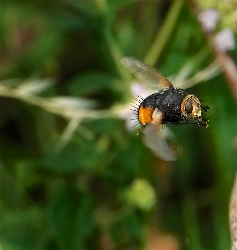 On flying insects-9