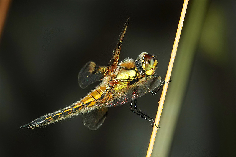 On Insect flight-2