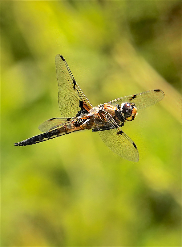 On flying insects-5