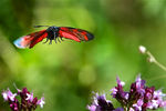 Title: Insects in flight-16