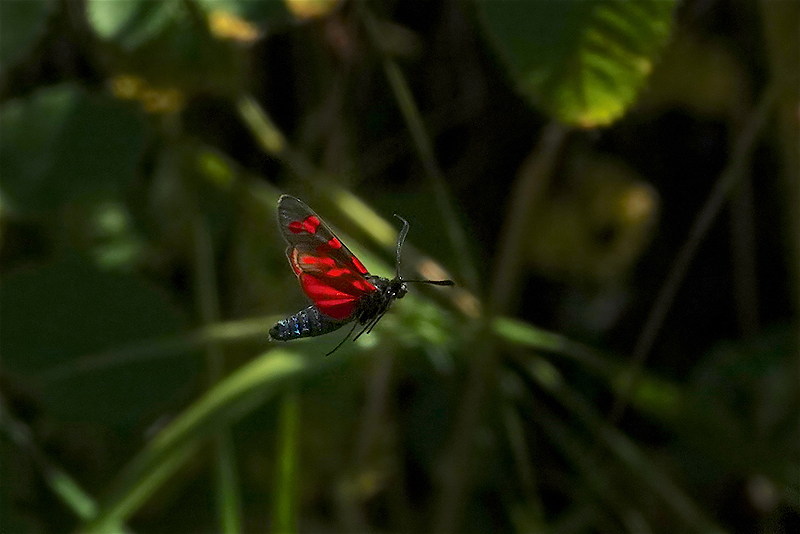 Insects in flight-10