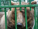 Title: Save the romanian captive bears