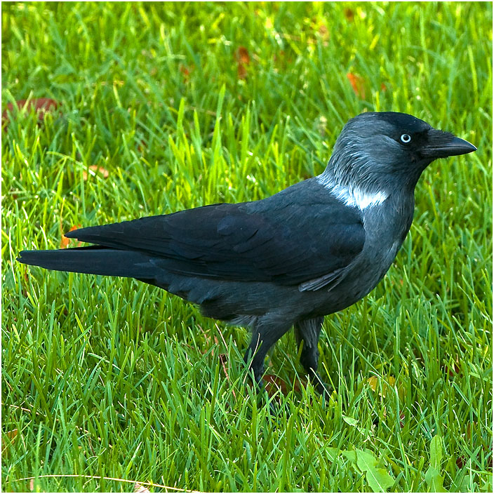 Crow of the airport