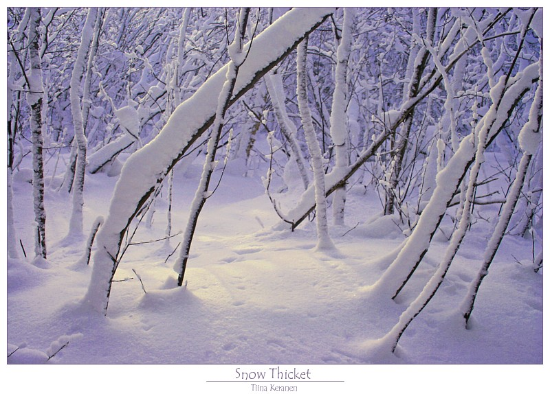 Snow Thicket