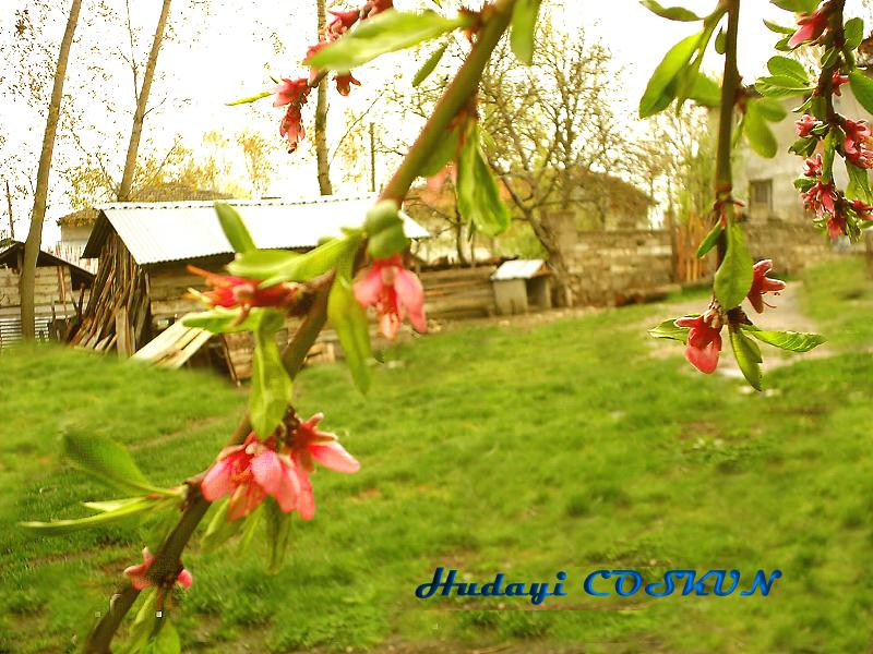 Spring and tree Flowers