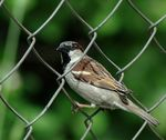 Title: Bird on the Fence
