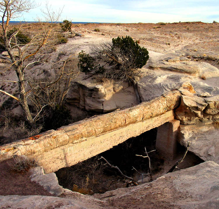 Petrified Bridge