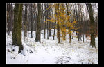 Title: First Snow iii - For Evelynn