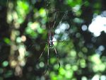 Title: Giant Spider