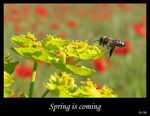 Title: Spring is coming...