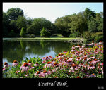 Title: Central Park NY