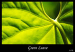 Title: Green Leave