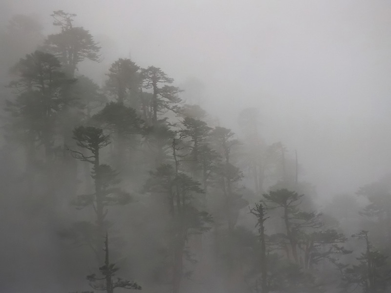 Fog in Yumthang