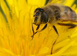 Title: Bee...2