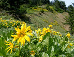 Title: Balsam Trail View