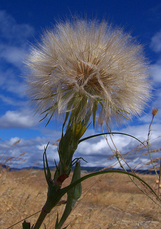 Seeds to the Wind