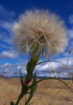 Title: Seeds to the Wind Camera: Kodak Easyshare LS753