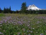Title: Mountain Meadow