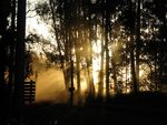 Title: Sunset in the Dust