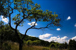 Title: Clouds and tree