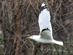 Title: Low Flying Gull