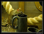Title: Thirsty Mr RatNikon D200