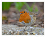Title: My First Robin!Nikon D200