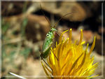 Title: green insect