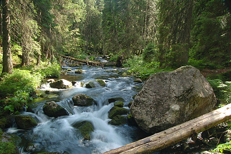 Stream in Tatra Mountains