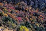 Title: Colorful Autumn at North Sikkim: for Bob