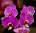 Title: Orchids from Deccan Traps