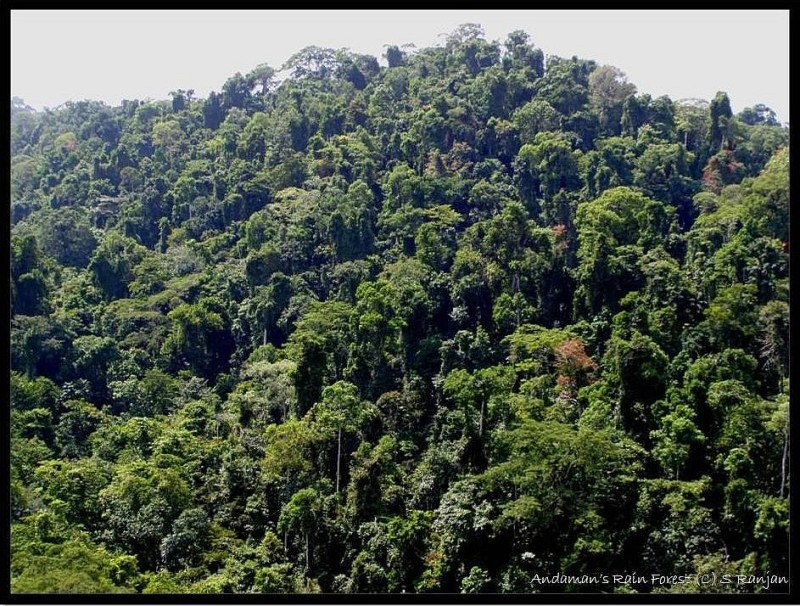 Habitats -- Tropical Rain Forest Pictures, Wallpapers, Downloads