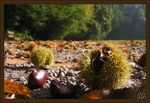 Title: Sweet Chestnuts